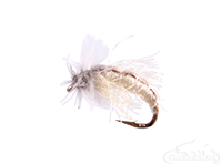 buy Caddis Pupa, Z-Wing, Cream