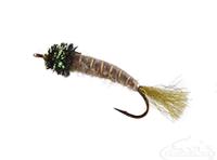 Cranefly Larva