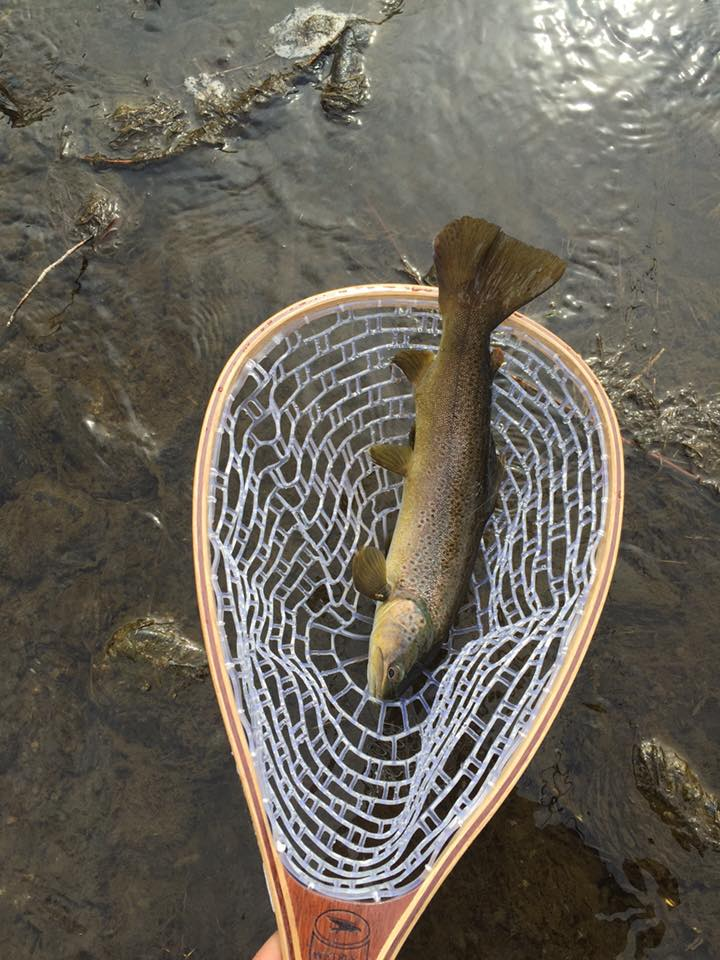 Fly fishing with Chad, rainbow trout picture